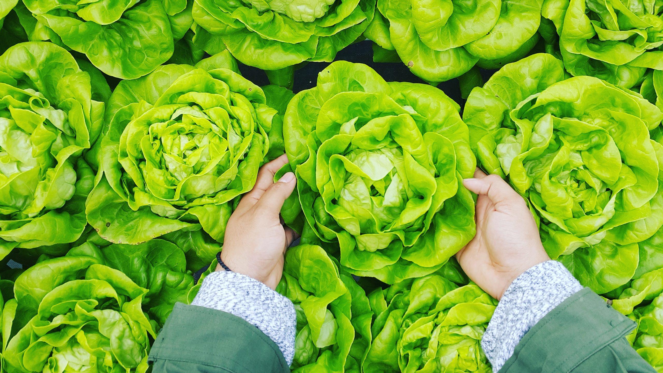 landbouw-greenport-duin-en-bollenstreek