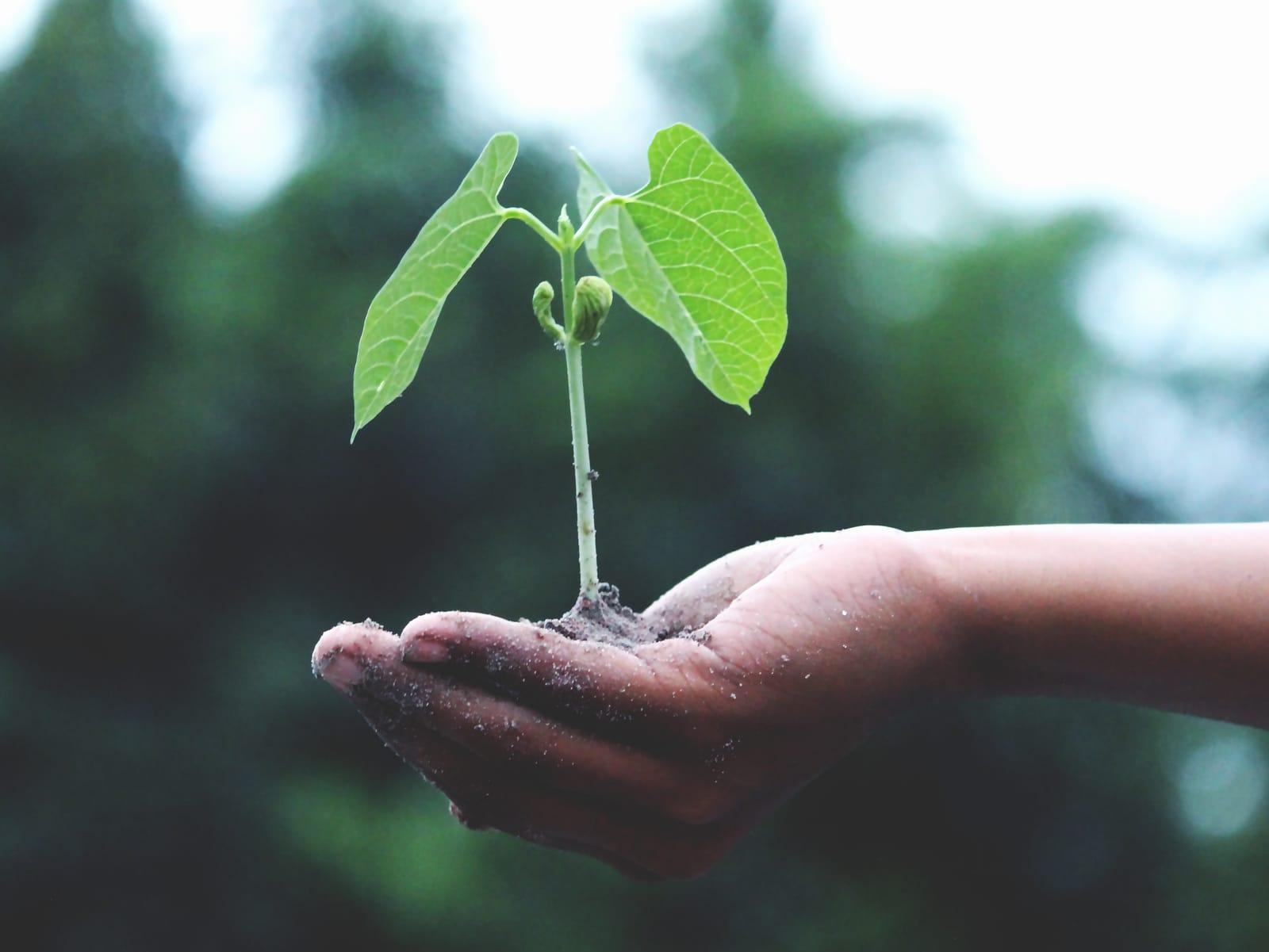 groeiend-plantje-tu-innnovation-prize-greenport-duin-en-bollenstreek