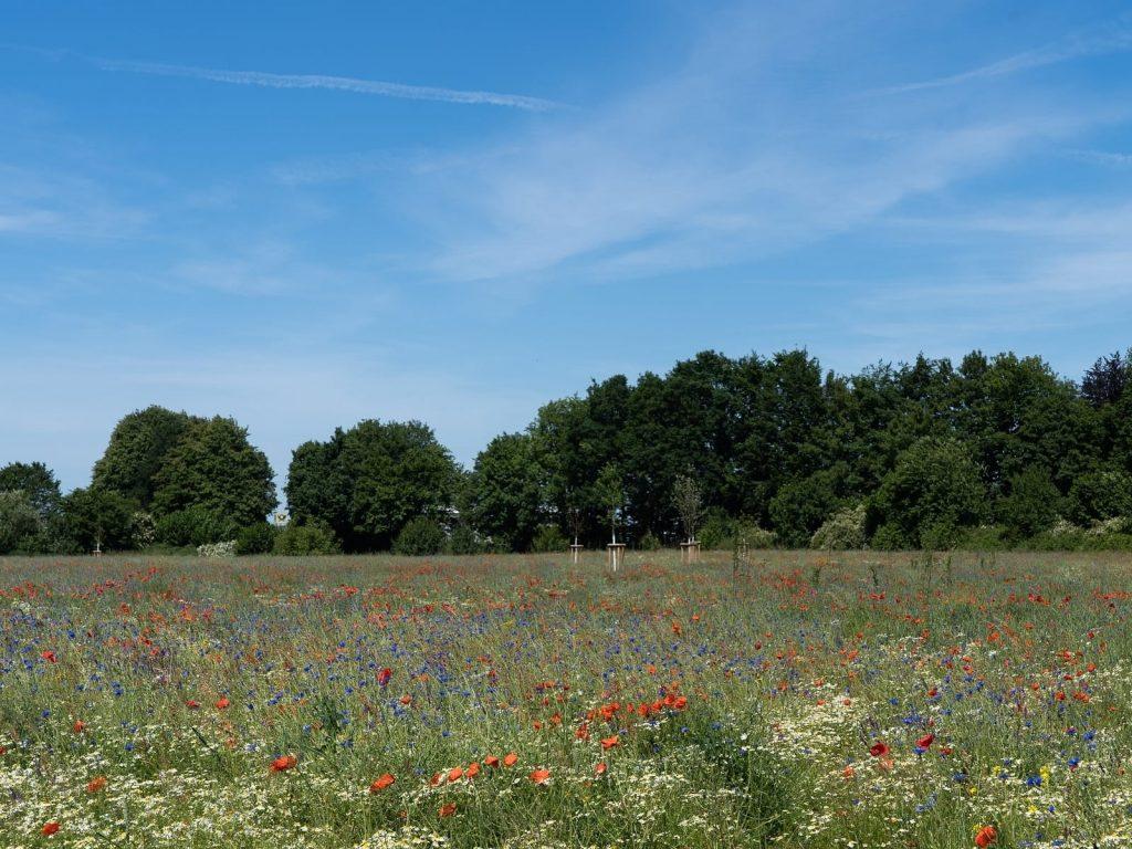 wilde-bloemen-greenport-duin-en-bollenstreek