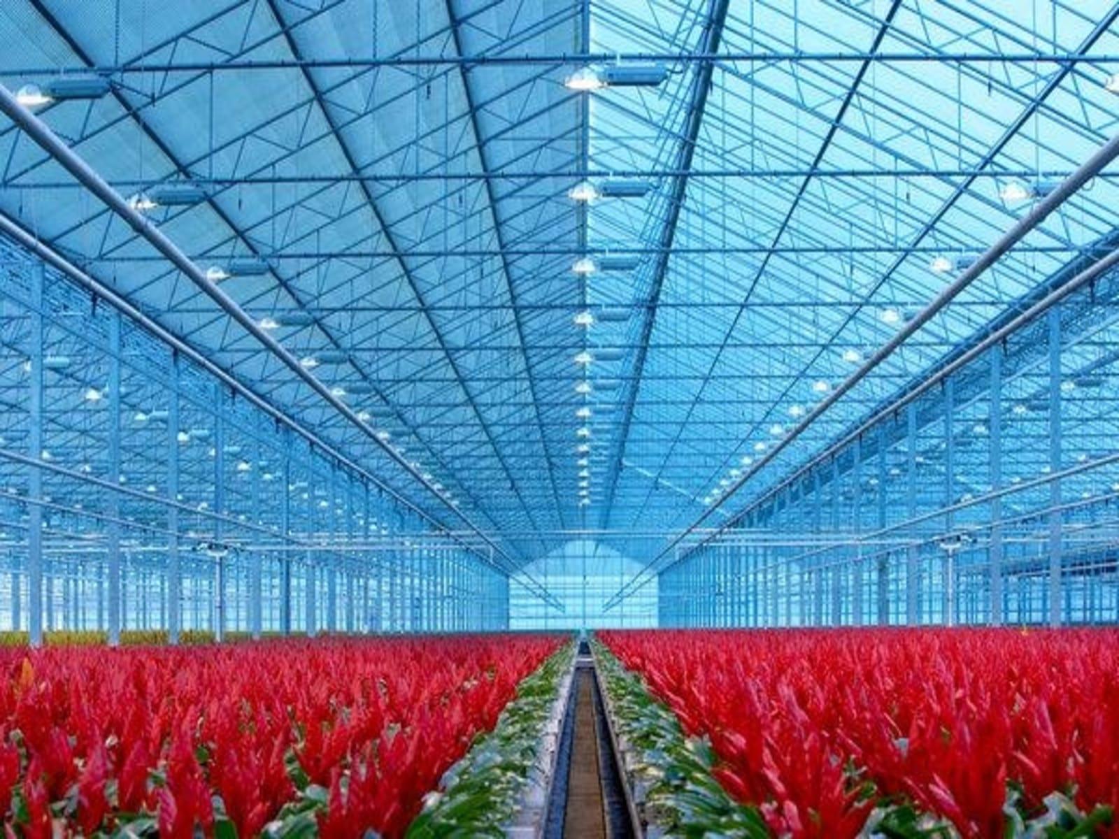 tuinbouwakkoord-greenports-nederland-greenport-duin-en-bollenstreek
