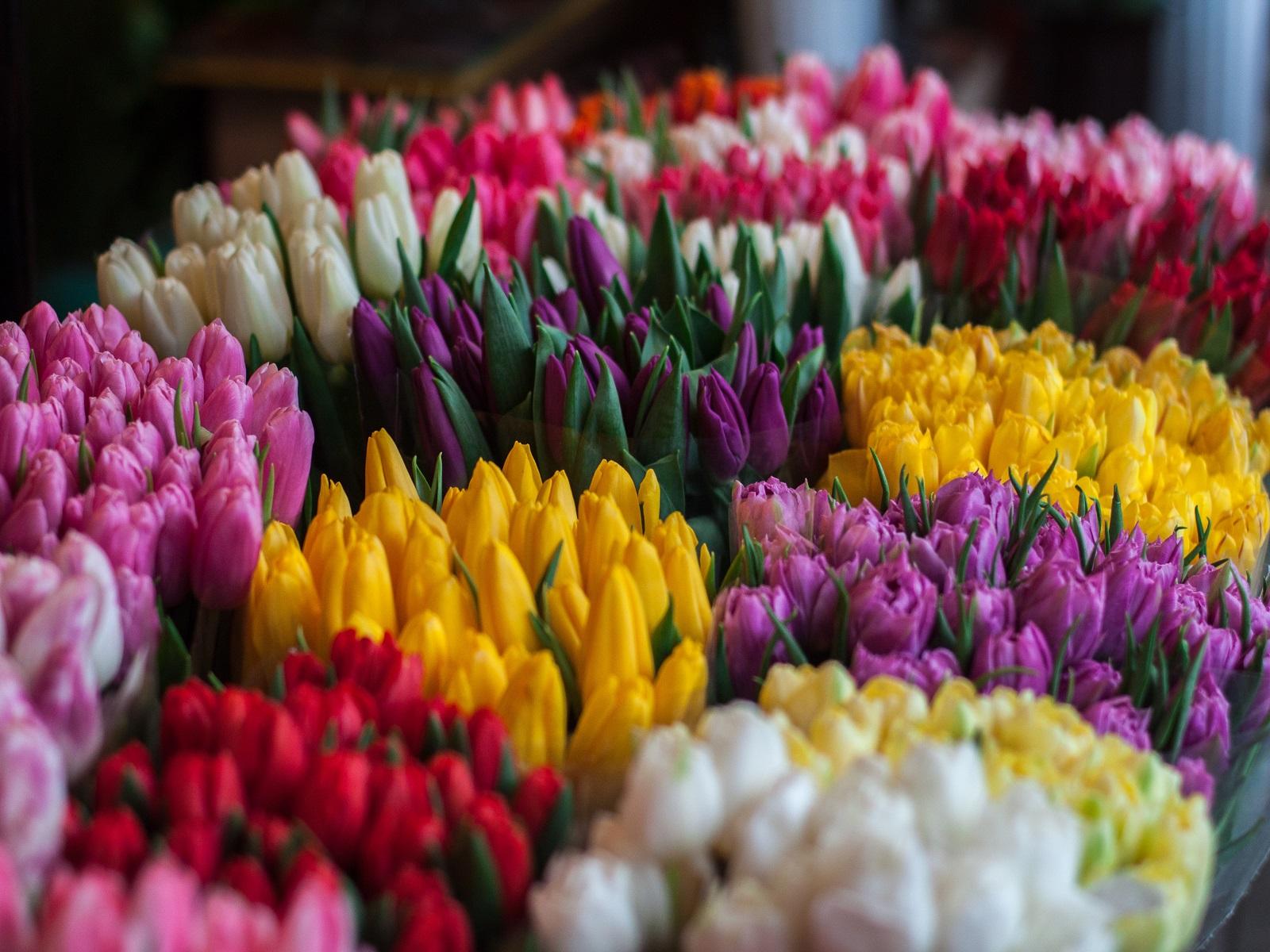 bloemen-planten-maken-gelukkig-greenport-duin-en-bollenstreek