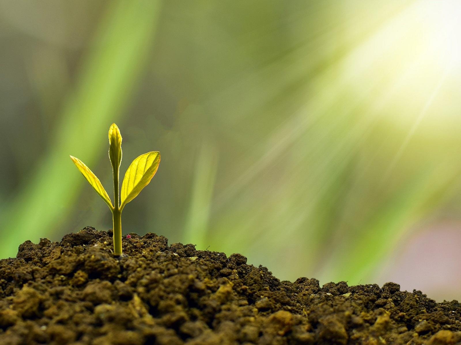 Webinar Plantgezondheid: inzet biostimulanten voor sterk gewas