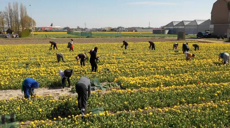 internationale-medewerkers-sierteeltlcuster-bollenteelt-greenport