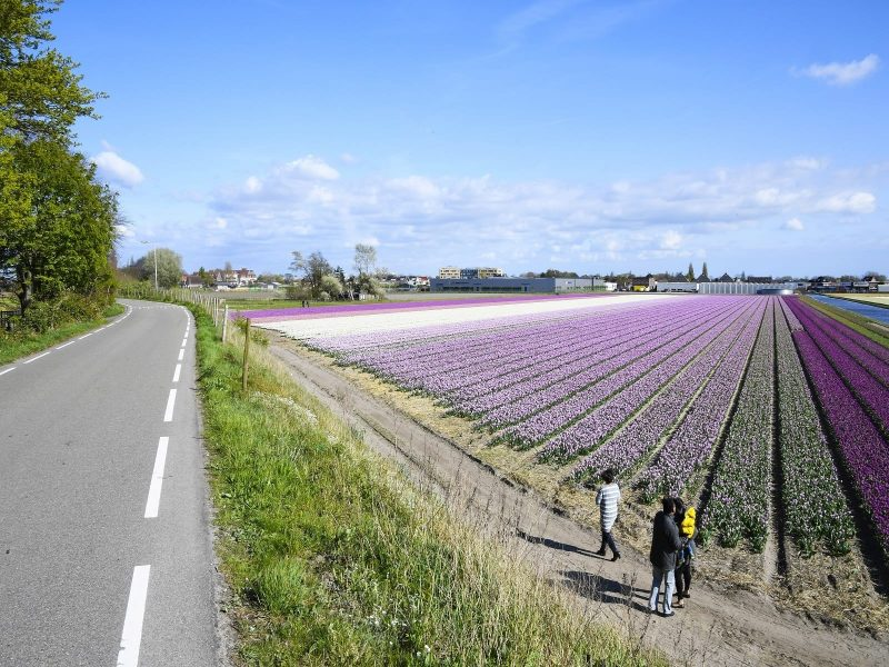 Bollenvelden-agrotoerisme-greenport-duin-en-bollenstreek