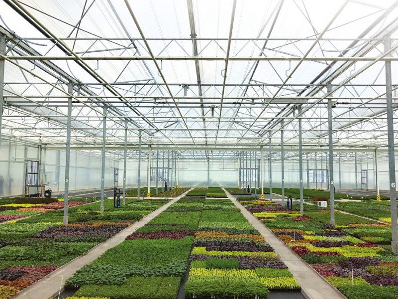 Perkgoed-floritrials-greenport-duin-en-bollenstreek