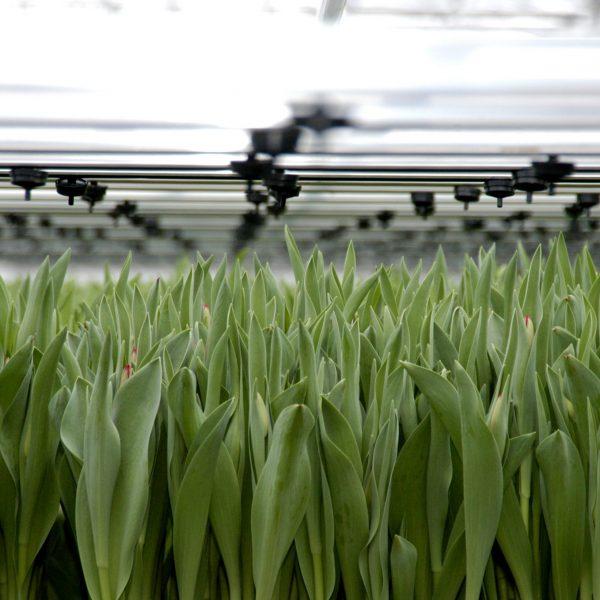 Toekomst-tuinbouw-en-handel-greenport-duin-en-bollenstreek